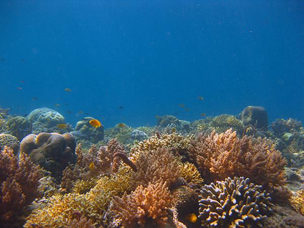 gili air snorkeling