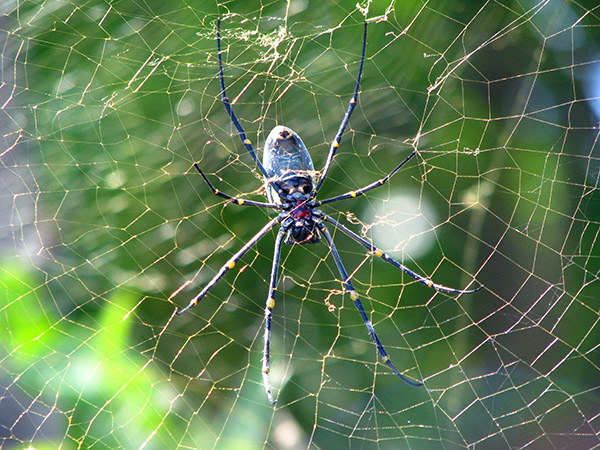 gili air spider