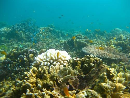 Jemeluk snorkeling