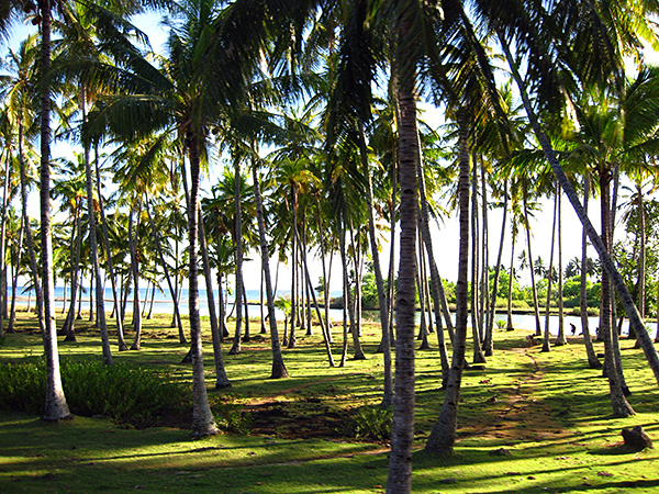view from lombok road coconut trees