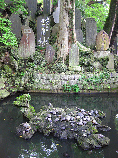 Naritasan Shinshō-ji Temple turtles