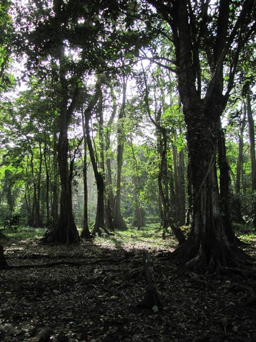Forest - Puerto Viejo, Costa Rica