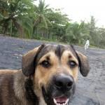 Stray dog - Puerto Viejo, Costa Rica