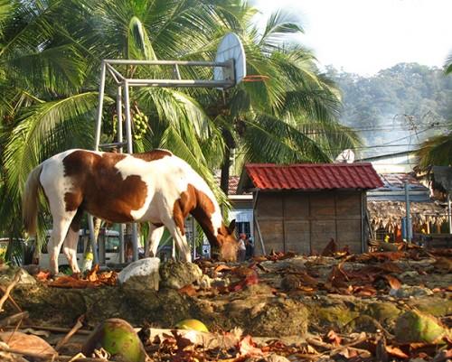 Wild horse - Puerto Viejo, Costa Rica