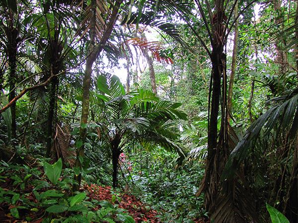 Gandoca-Manzanillo Wildlife Reserve
