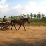 Horsecart - Mekong River, Kampong Cham, Cambodia