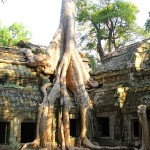 Tree_Ta_Prohm