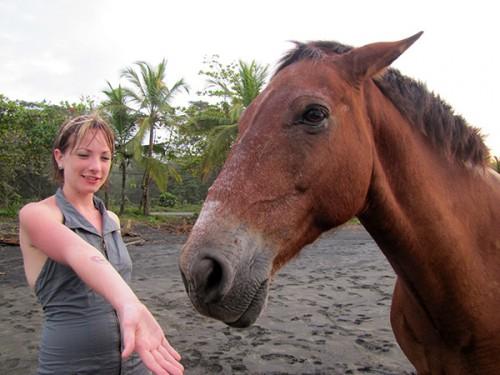 Wild Horse, Playa Negra, Costa Rica