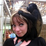 Howler monkey - Jaguar Rescue Center