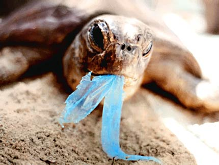 turtle eating a plastic bag