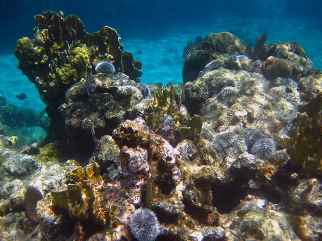 Snorkeling West Bay Roatan
