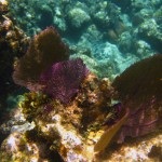 Snorkeling West Bay Roatan