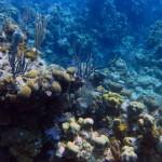 Scuba Diving West Bay Roatan