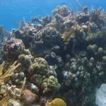 Scuba Diving West Bay Roatan