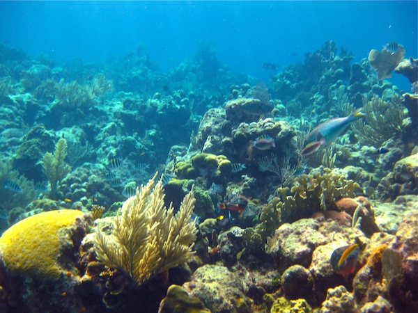 Snorkeling off West Bay Beach, Roatan, Honduras