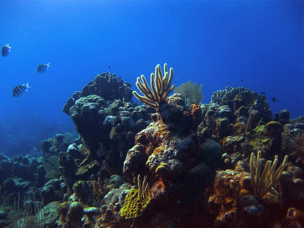 Scuba Diving Roatan