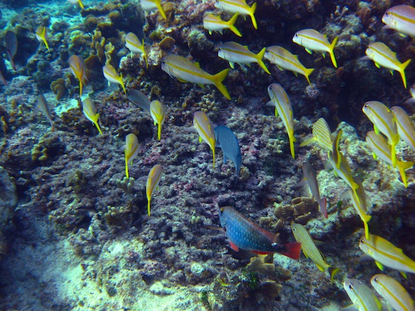 Roatan Reef fish