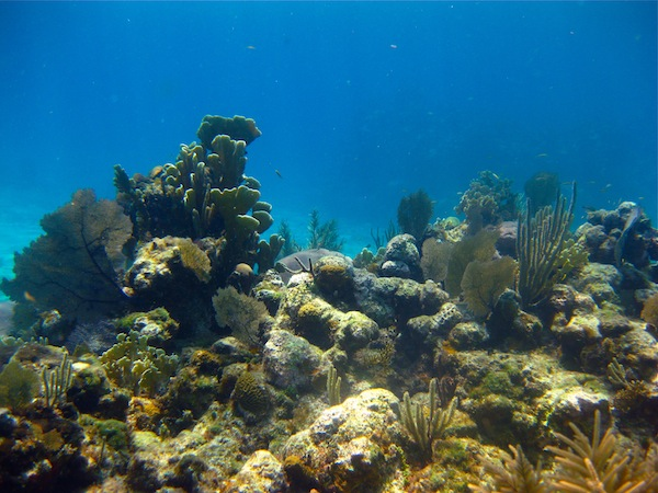 Snorkeling Roatan