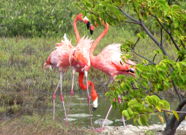 Flamingo butt - Bonaire