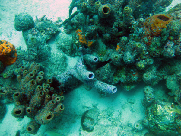 Reef - Bonaire