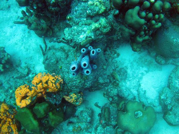Reef - Bonaire